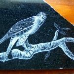 Granite etching of a Sharp Shinned Hawk
